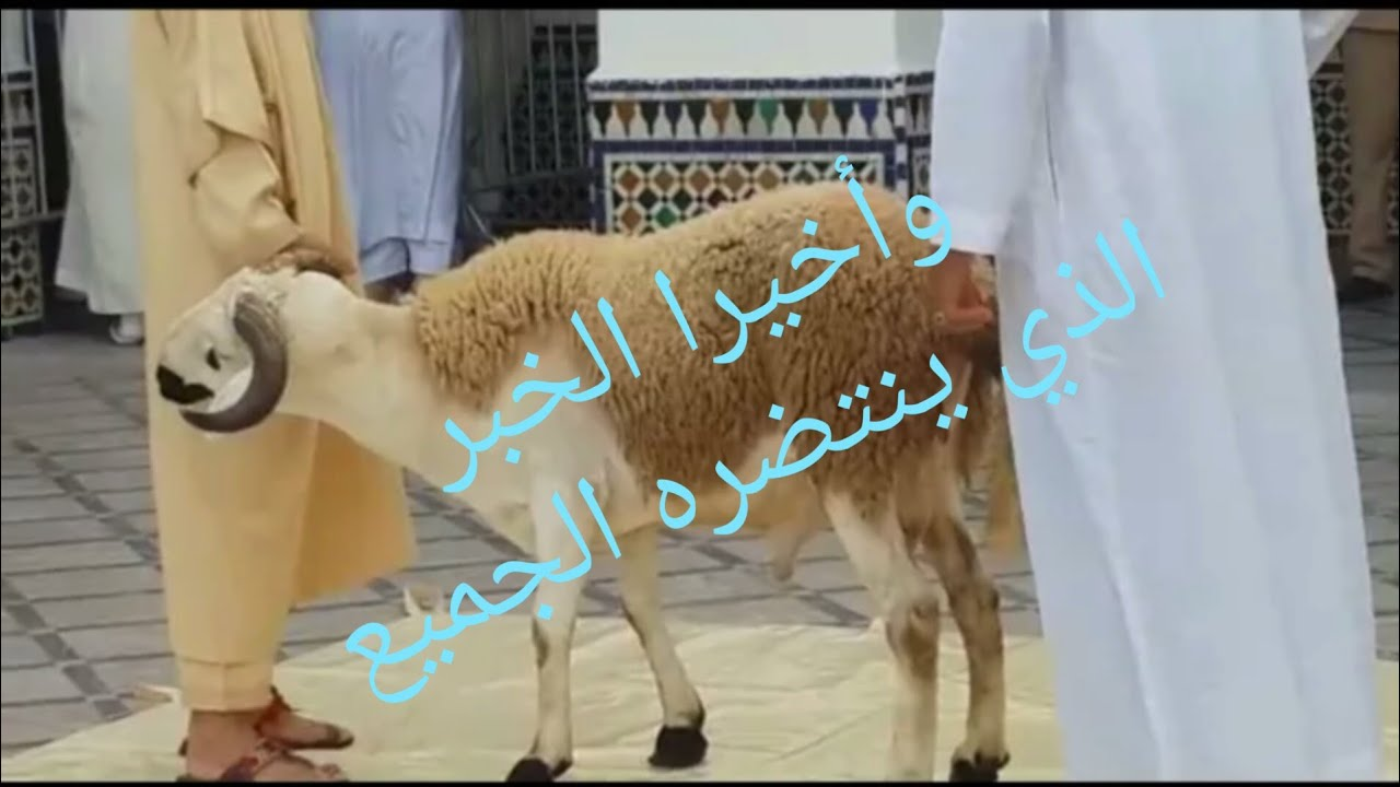 خبر عاجل بخصوص عيد لأضحى المبارك