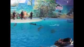 Дельфинарий в Сочи, смешные моменты(ewjq7cc1 Дельфинарий в Сочи, смешные моменты Подпишись на смешные видео; : http://www.youtube.com/user/medvedisosediTV., 2015-09-29T05:46:46.000Z)