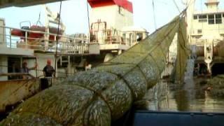 Great haul - super trawler Kristina off Africa coast