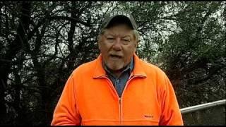 Quail Posts - Sounds A Quail Makes - Texas Wildlife Association