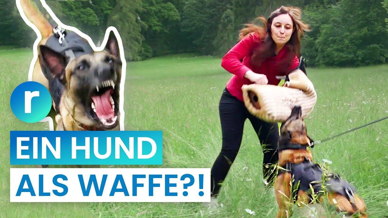 Hunde-Ausbildung wie beim Militär: harmloses Hobby oder Gefahr für andere? | reporter