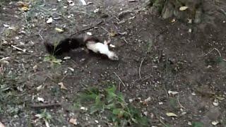 草の上で痙攣している何かを見つけた男性。それを持ち上げた時、彼はすぐに行動を起こした