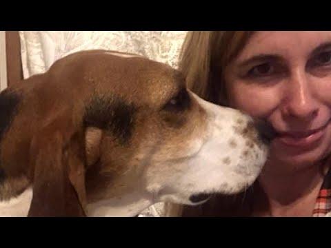 Rescue Dog Smelled Cancer Cells on Owner's Nose