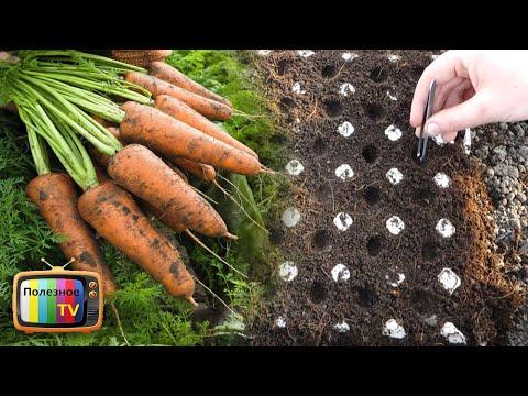 ПОСЕВ МОРКОВИ БЕЗ ПРОРЕЖИВАНИЯ И ПРОПОЛКИ СЕКРЕТ МУДРЫХ ОГОРОДНИКОВ | урожайный | посадить | полезное | посадка | морковь | моркови | садить | огород | весной | обзор