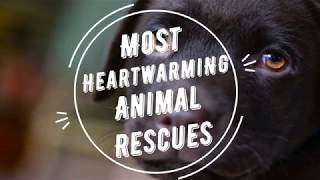 MOST HEARTWARMING ANIMAL RESCUES | Dogs, Cats & More!