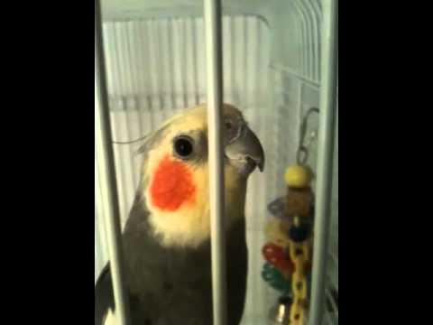 Talking Terry the bird