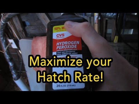 Simple Trick To Increase Poultry Hatch Rate   Incubating In The Winter