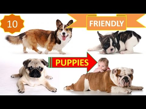 Top 10 Friendly Dogs In The World For Family And Kids