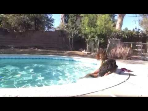Swimming dog video funnydog tv for Terrace park swimming pool sioux falls