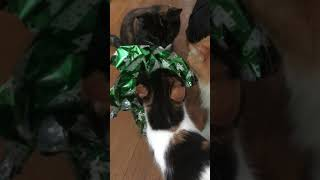 Cats opening gift #funnycats