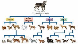 Генетика собак (рассказывает генетик Дмитрий Квон)