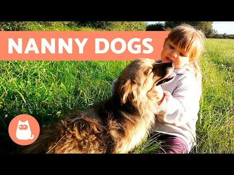 The BEST Nanny Dogs – 8 Dog Breeds For Children