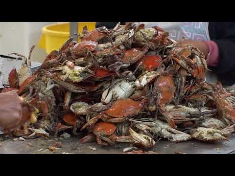 Shortage of Foreign Workers Jeopardizes Maryland Crab Business