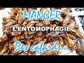 L'entomophagie, la nourriture du futur?