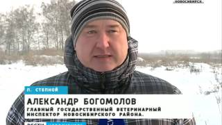 Незаконный скотомогильник в селе Степном так и не убрали