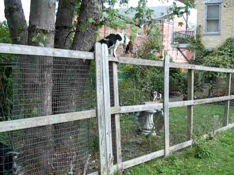 how to stop a dog from climbing a fence