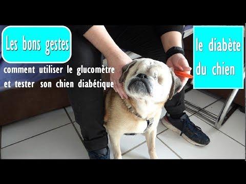 Diabète Du Chien : Comment Utiliser Le Glucomètre