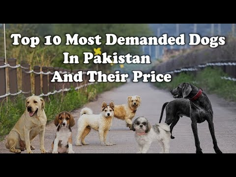 15 Most demanded dogs and their Price in Pakistan
