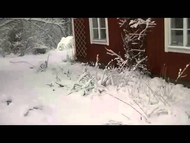Wim Hof leert mij met blote voeten in de sneeuw