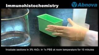 Gambar cover Immunohistochemistry