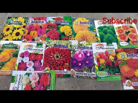 Where To Buy Flower/Vegetables Seed  Online/Offline At Cheapest Rate Best Quality ||