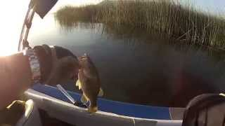 Bass Fishing Clear Lake California