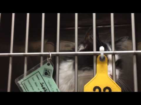 A tour of cats and dogs up for adoption at Bay County Animal Control in June 2016