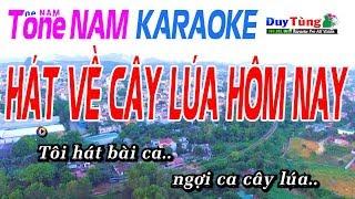 Hát Về Cây Lúa Hôm Nay Karaoke Tone Nam - Nhạc Sống Duy Tùng