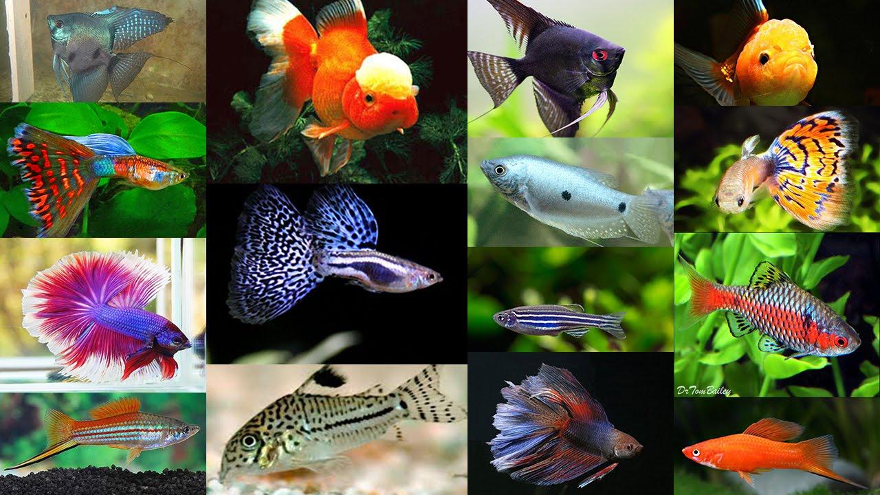 рыб и описание их