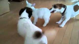 シッポ振りすぎじゃない? http://sumitani.jugem.jp/