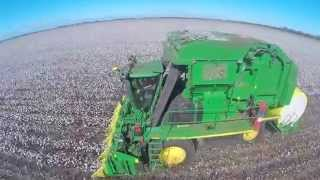 Cotton Picking 2015