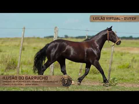 Lote 18 - Ilusão do Garrucho