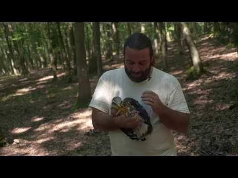 Despre protecţia păsărilor cu Szilárd J. Darόczi