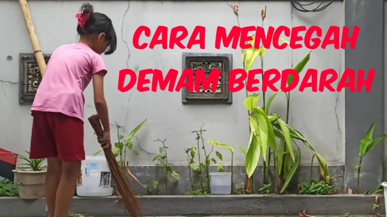 CARA MENCEGAH DEMAM BERDARAH - YouTube