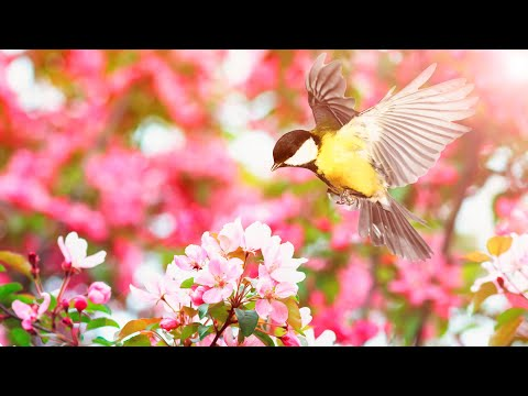 "Peaceful Instrumental Music, Relaxing Nature Music "" Birds Sing in the Dawn, by Tim Janis"