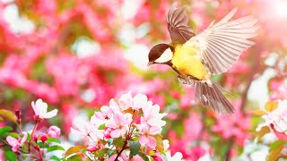 Peaceful Instrumental Music, Relaxing Nature Music  Birds Sing in the Dawn, by Tim Janis