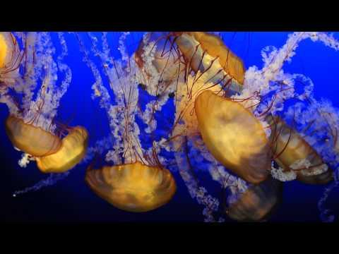 Moment of Zen at the Omaha Henry Doorly Zoo's Aquarium