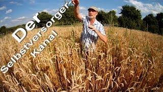 Weizenanbau fuer Selbstversorger und die Gesundheit