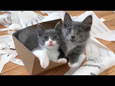 Kittens Love Trash! (Enrichment Ideas!)