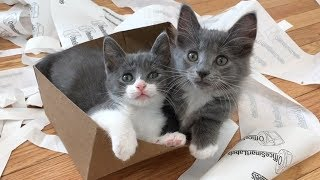 kittens-love-trash-enrichment-ideas