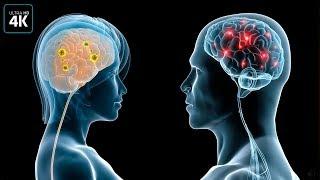 Вот чем отличается мозг мужчин и женщин!