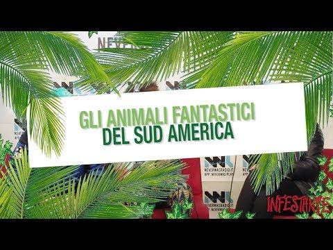 ANIMALI FANTASTICI DEL SUDAMERICA ❦ Intervista di NeverWas Radio ad INFESTANTE 2017