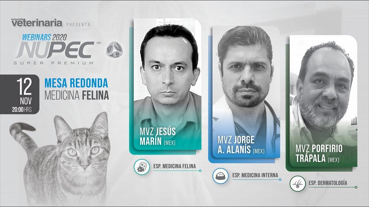Webinars Nupec 2020 | Mesa Redonda Medicina Felina