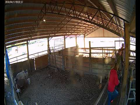 Animal Cam 2018-04-17: Hamilton County High School