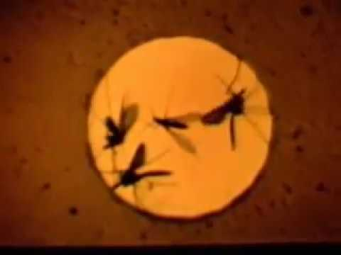 Sandfly Control, war department film