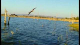 BBC Wildlife Specials - Episode 2 - Eagle