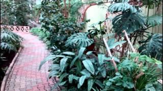 Зелёный сад зимой Калининград Снято на Lenovo Vibe X