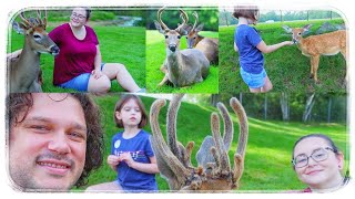 Deer Encounter That Surprised Us All
