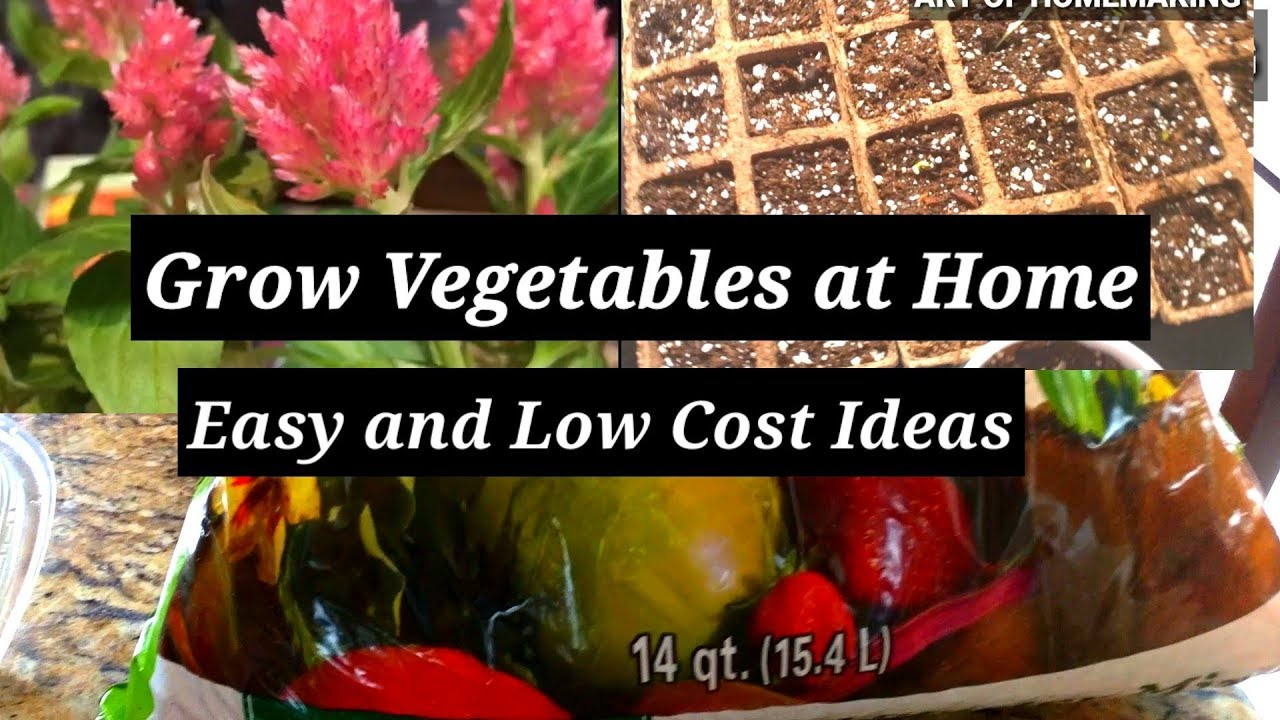 How To Grow Indian Vegetables In Usa Step By Easy And Low Cost Ideas Art Of Homemaking