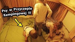Przyczepa Kempingowa i ... Dwa Psy !!! - Jak to u nas Wygląda? (Vlog #248)